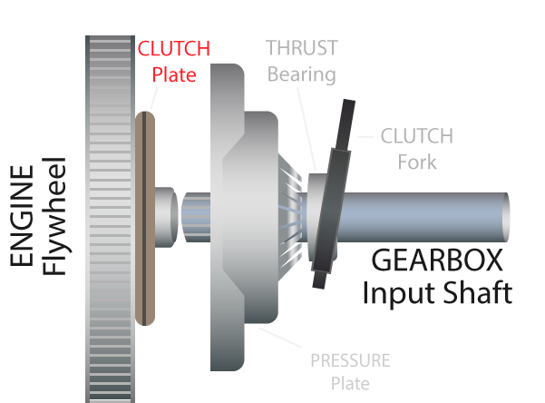 a complete clutch cut out from its background laid out at a slight angle